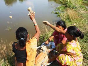 養殖している魚に餌をやる母親