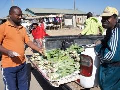 農園の新鮮な白菜をマーケットで販売開始