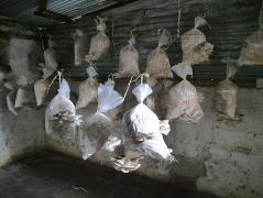 キノコの培地が室内に並んでいます