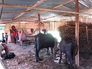 ④養鶏小屋は5世帯が暮らすには狭すぎ、家畜と同じスペースではいつ病気になってもおかしくありません