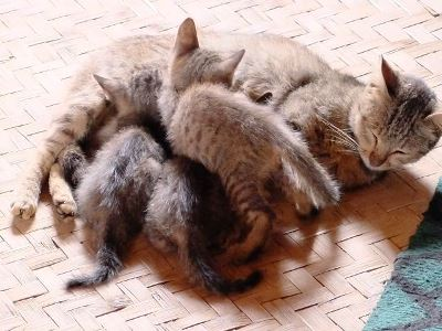 写真3 子猫たち