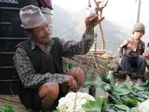 カリフラワー栽培などで農業収入を増やしている農家も増えてきました
