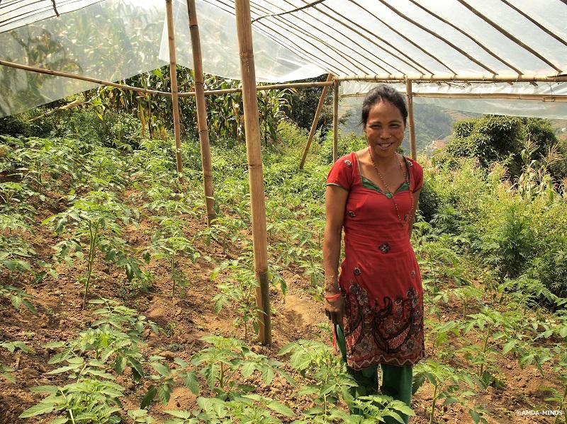 初めてビニールハウス栽培に取り組んでいるシタ・マガールさん